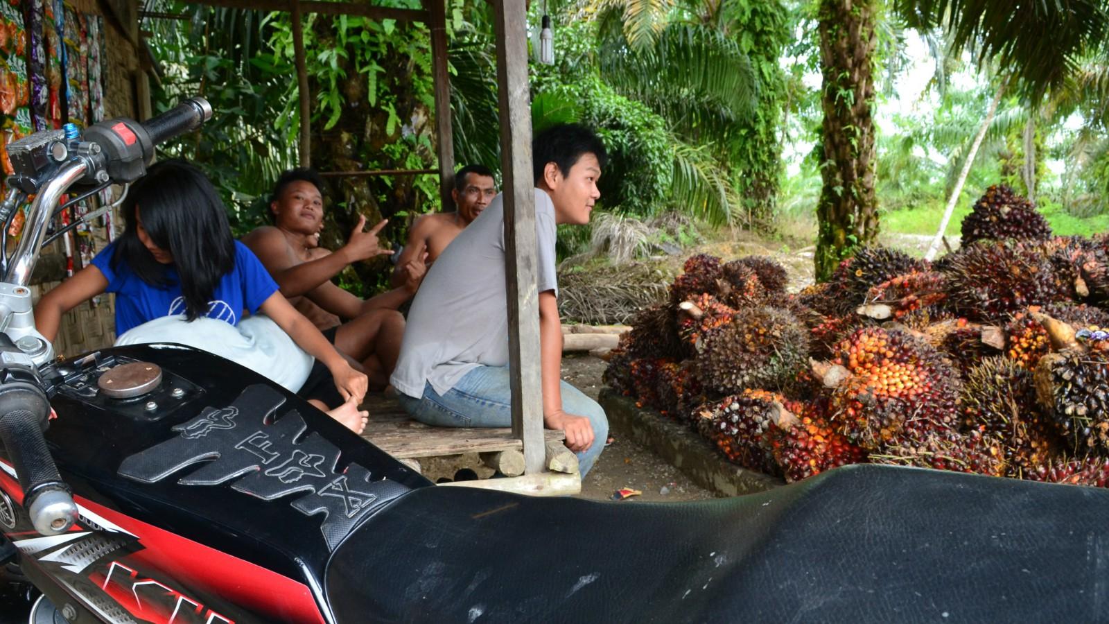 Minst tre miljoner indonesier beräknas vara direkt sysselsatta tack vare palmoljan